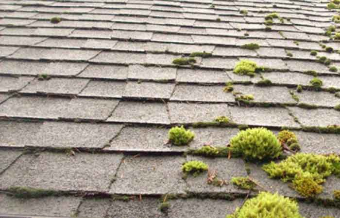 How To Naturally Get Rid Of Moss On Roof Without Chemicals Roofscour
